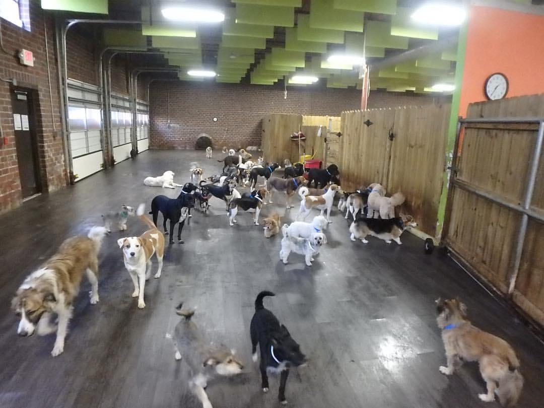 soundproof dog kennel using hanging sound baffles
