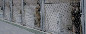 controlling excessive noise levels in a kennel to protect animals from noise exposure levels with sound panels for a kennel space